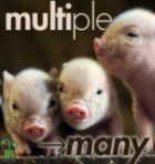 Multi-many