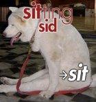Sid-sit